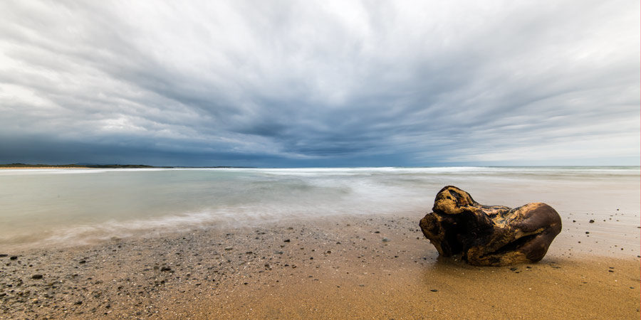 Driftwood on Cliffony Beach, Sligo