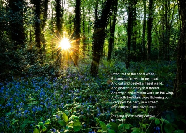 The Song of Wandering Aengus, Hazlewood Bluebells, WB Yeats